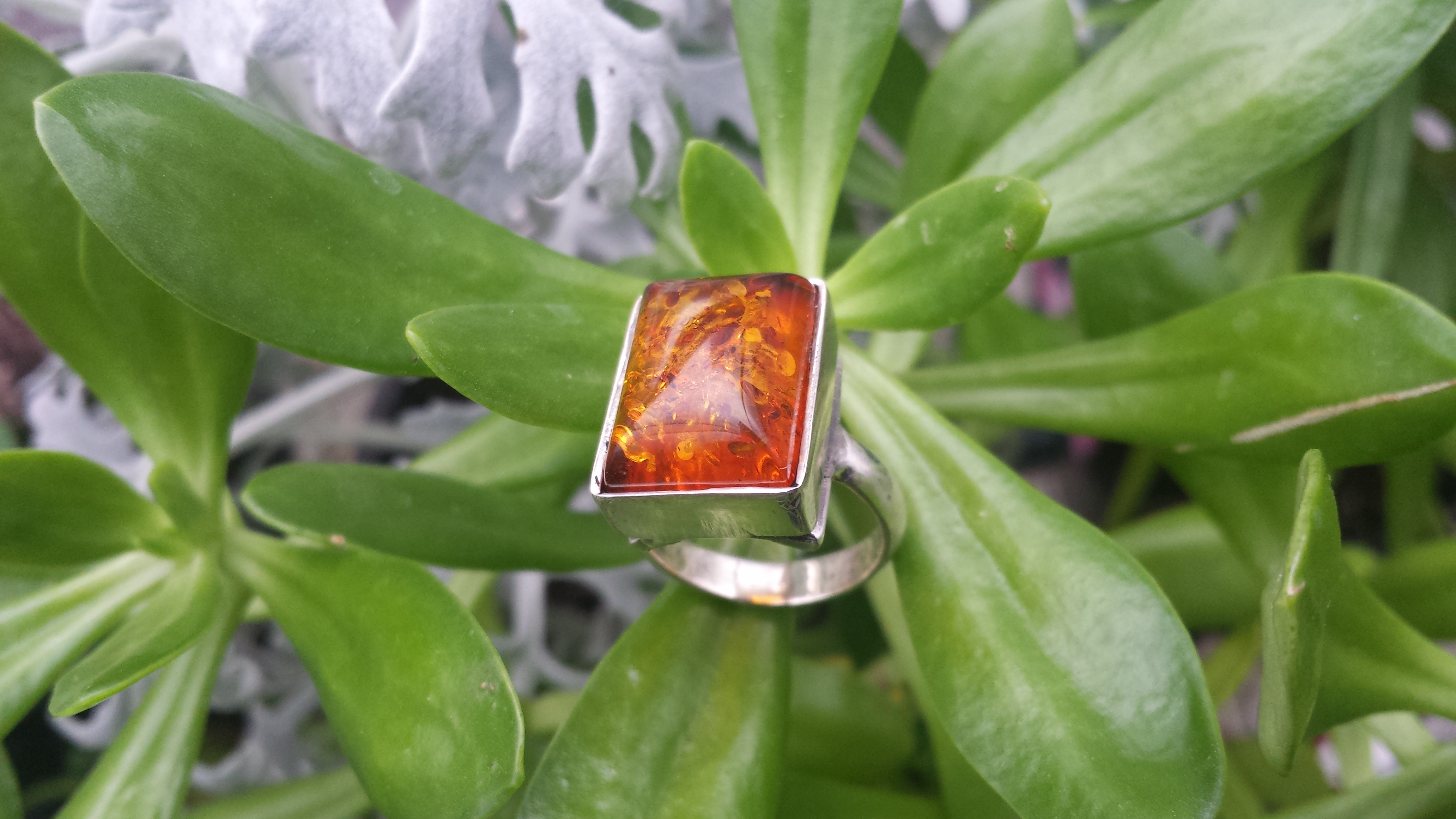 HONEY AMBER RING & SOLID 925 STERLING SILVER SIZE 7  9 G